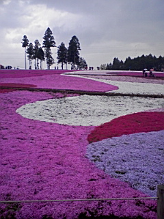 秩父の芝桜_e0013178_12183237.jpg