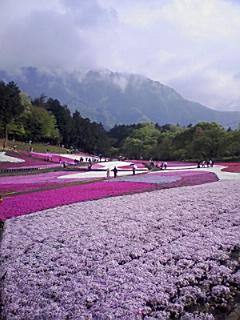 秩父の芝桜_e0013178_12183251.jpg
