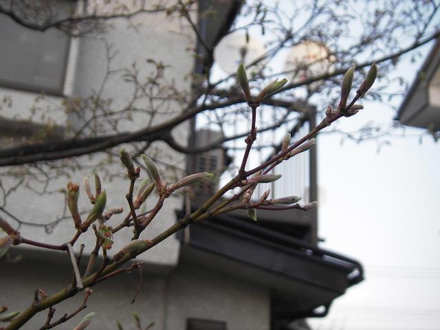 春本番_f0105112_111345.jpg