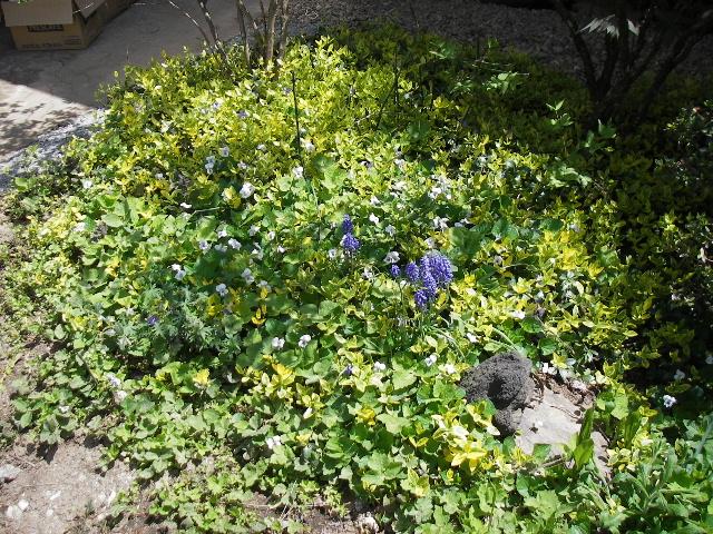 春本番_f0105112_1132462.jpg