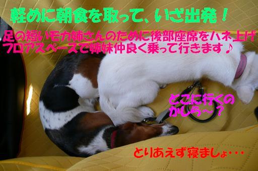 f0121712_1613168.jpg