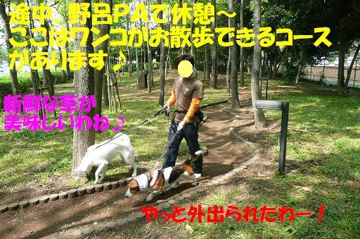 f0121712_16134417.jpg