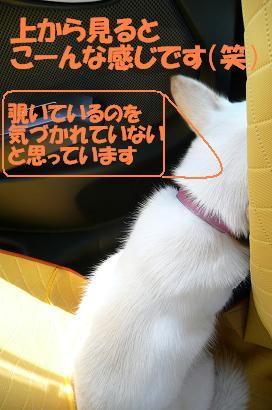f0121712_1614895.jpg