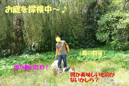 f0121712_16151542.jpg