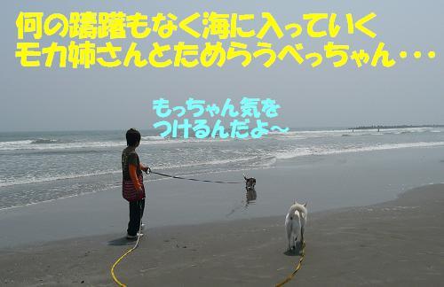 f0121712_1619023.jpg