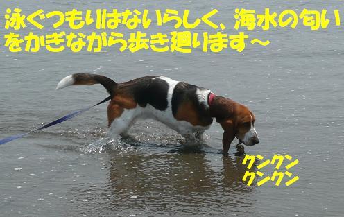 f0121712_16194487.jpg
