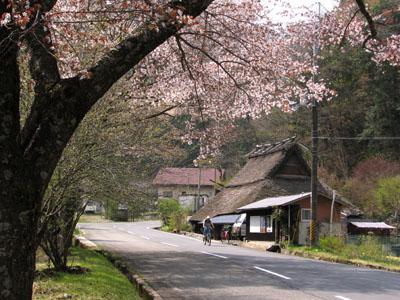 北山 桜花盛り_e0048413_22514785.jpg