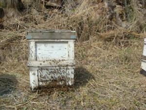 ハチ、来たッ、_c0123523_21431246.jpg