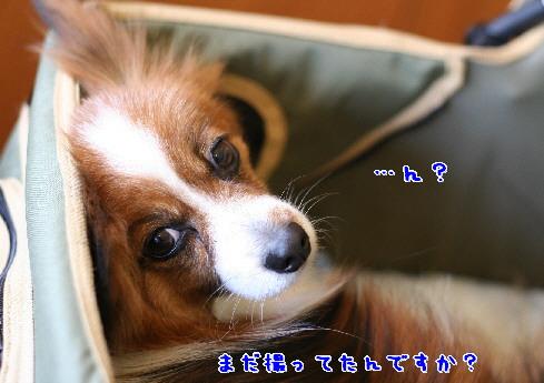 d0013149_113673.jpg