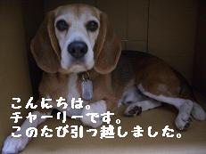 b0098660_22153222.jpg