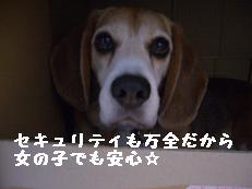 b0098660_22155825.jpg