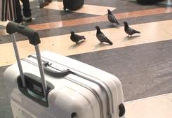 イタリア旅行・ミラノからフィレンツェへ、再びユーロスターで・②-8エピソード4月18日_d0083265_022132.jpg