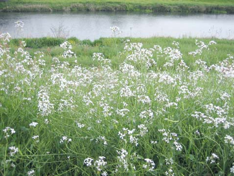 春の水_c0107829_0192587.jpg