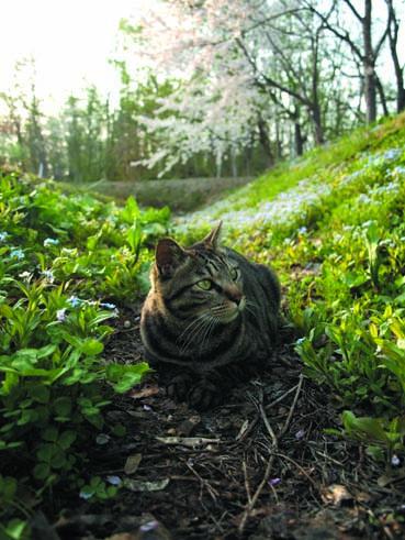 猫と花見_a0094336_8454347.jpg