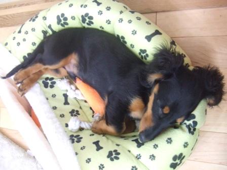 ベッドでもなけりゃ~枕でもない!_e0147339_14124487.jpg
