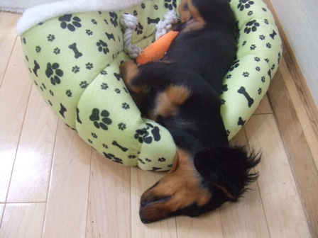 ベッドでもなけりゃ~枕でもない!_e0147339_1413954.jpg