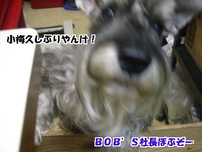d0020869_1249597.jpg