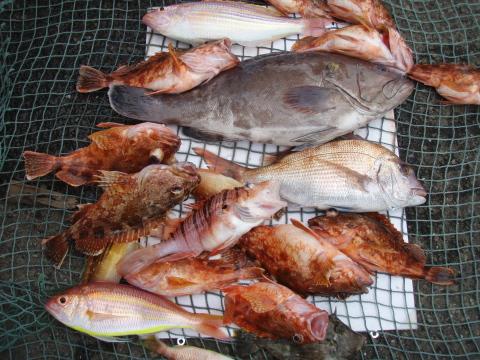 2008春のいまりマリーナ釣り大会_a0077071_19143035.jpg