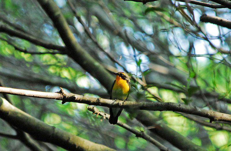 春の鳥_b0021897_21583528.jpg