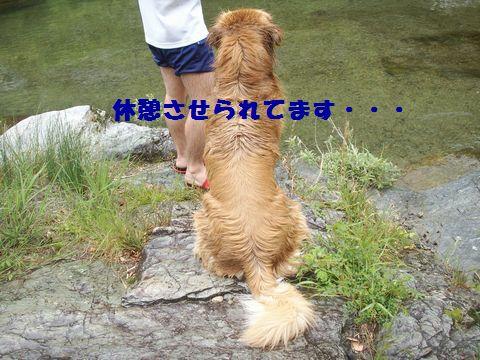 b0127531_8275246.jpg