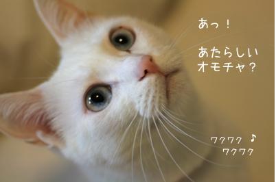 f0073833_1916210.jpg