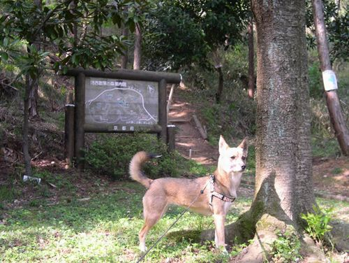 洛西散策の森_b0025947_18583755.jpg
