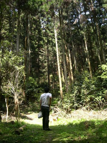 洛西散策の森_b0025947_19462493.jpg