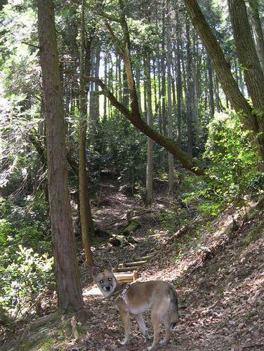 洛西散策の森_b0025947_19464357.jpg
