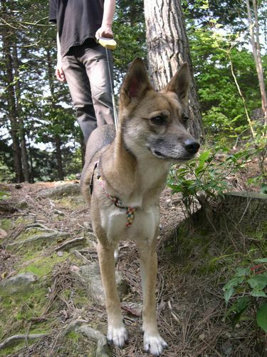 洛西散策の森_b0025947_1955323.jpg