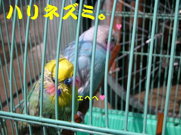 f0132055_045631.jpg