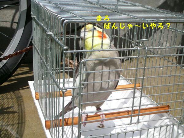 f0132055_051284.jpg