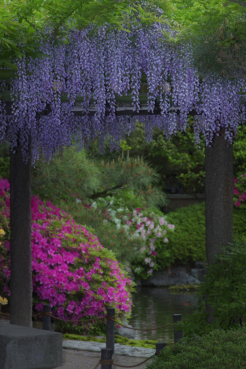 京都 城南宮 フジ_f0021869_23112511.jpg