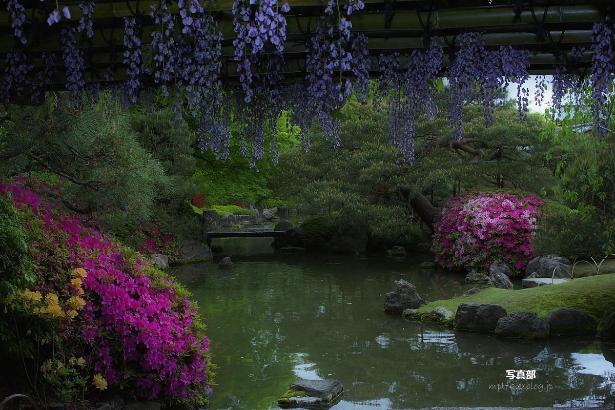 京都 城南宮 フジ_f0021869_23182084.jpg