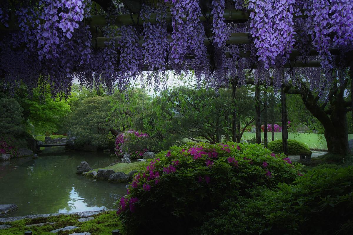 京都 城南宮 フジ_f0021869_234532.jpg