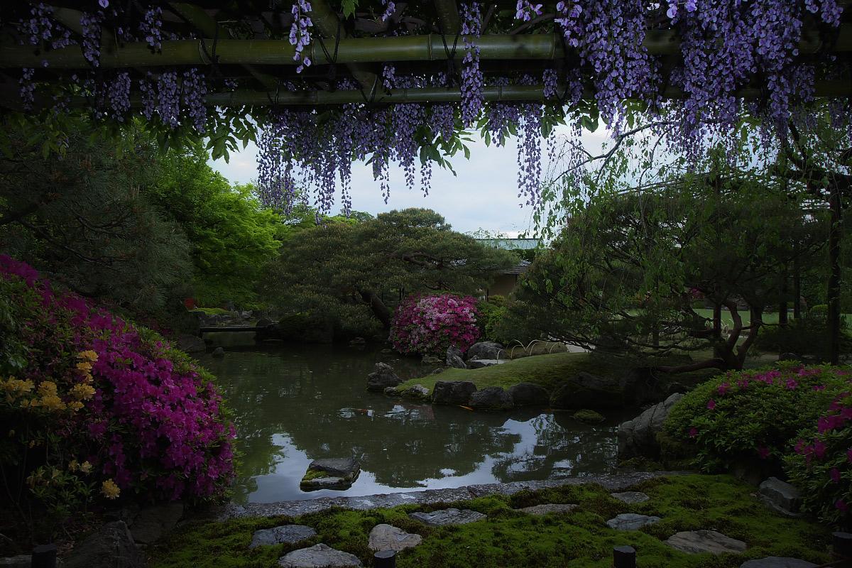 京都 城南宮 フジ_f0021869_2364671.jpg