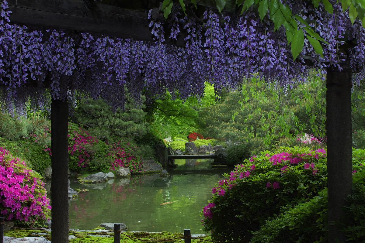 京都 城南宮 フジ_f0021869_2371982.jpg