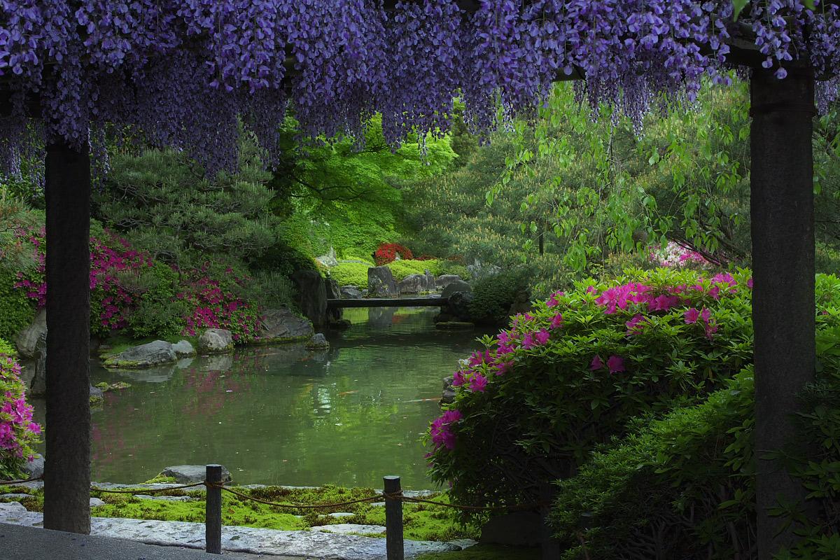 京都 城南宮 フジ_f0021869_2381561.jpg