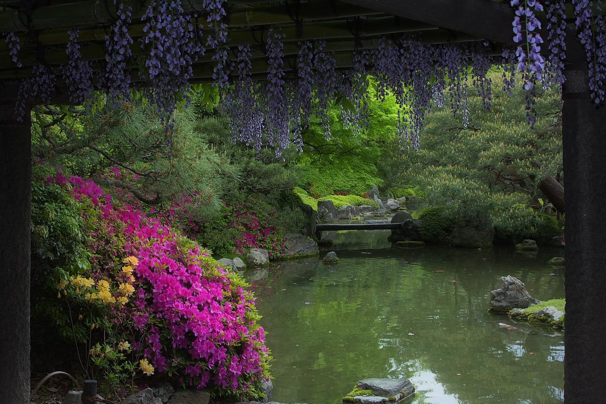 京都 城南宮 フジ_f0021869_2383787.jpg