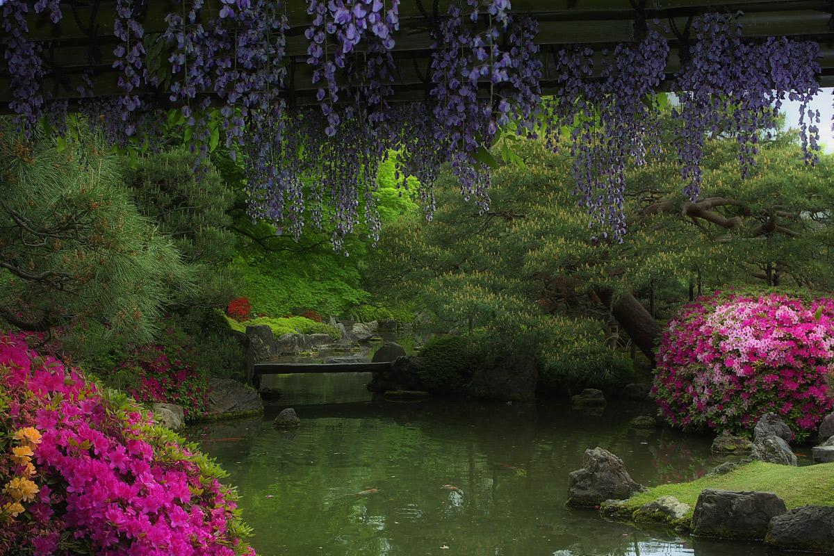 京都 城南宮 フジ_f0021869_2385917.jpg