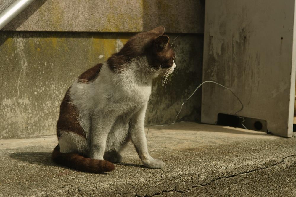 夕張の猫_f0042194_2313145.jpg