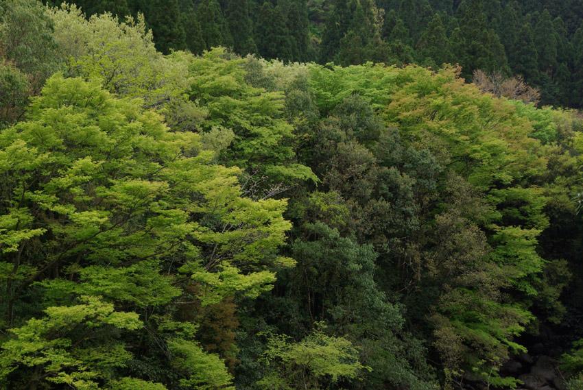 山の上のキャンプ場からいにしえの里『高千穂』へ_b0108109_934056.jpg