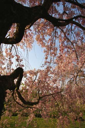 羊山芝桜 2008_e0062530_21515119.jpg
