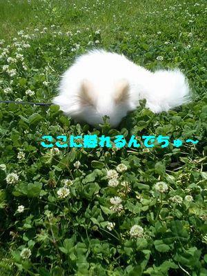 b0127531_20203288.jpg
