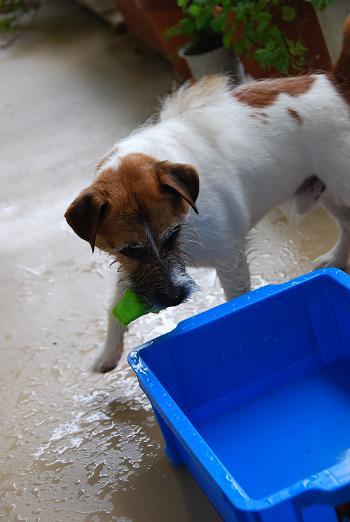 愛犬と豆もちと鳥すき焼き_c0099133_0534062.jpg