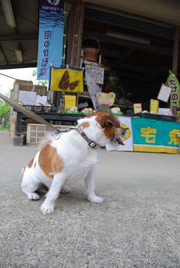 愛犬と豆もちと鳥すき焼き_c0099133_105440.jpg