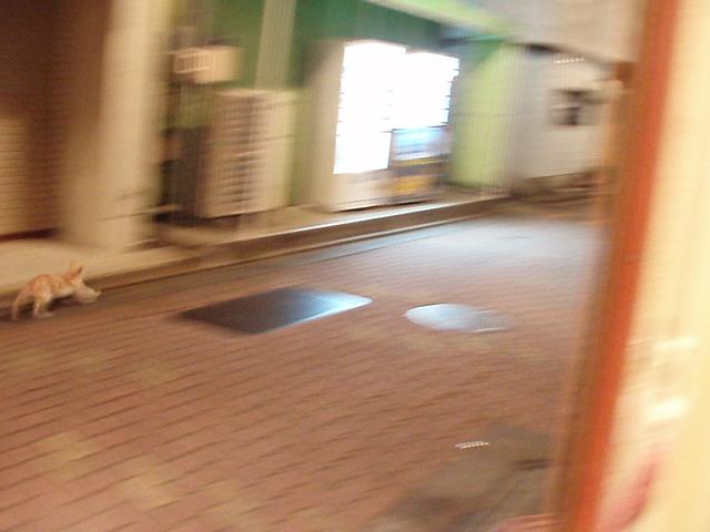 GWも終わりということで…カフェの台所事情など_c0010936_22394887.jpg