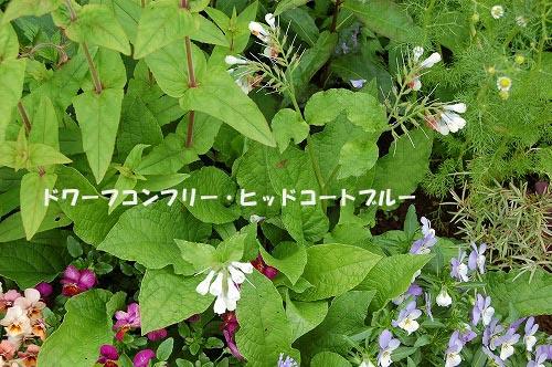 f0109337_2215980.jpg