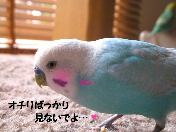 f0132055_0523770.jpg