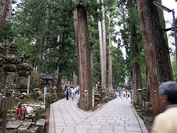 080506 杉がつくりだす風景_b0129659_948582.jpg