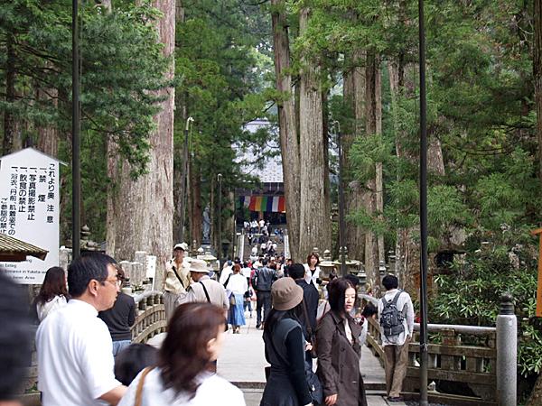 080506 杉がつくりだす風景_b0129659_949971.jpg